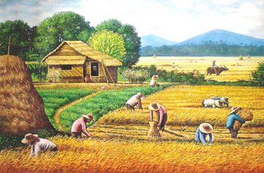 rice ruysa